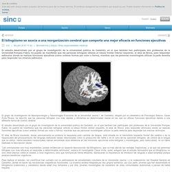 El bilingüismo se asocia a una reorganización cerebral que comporta una mejor eficacia en funciones ejecutivas / Noticias / SINC - Agencia SINC