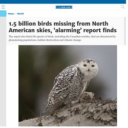 1.5 billion birds missing from North American skies, 'alarming' report finds