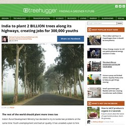India to plant 2 BILLION trees along its highways, creating jobs for 300,000 youths