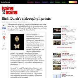 Binh Danh's chlorophyll prints