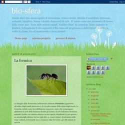 bio-sfera: La formica