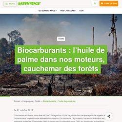 Biocarburants : l'huile de palme dans nos moteurs, cauchemar des forêts