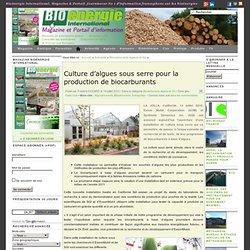 Culture d'algues sous serre pour la production de biocarburants