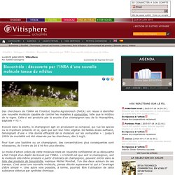 VITISPHERE 20/07/15 Biocontrôle : découverte par l'INRA d'une nouvelle molécule tueuse du mildiou