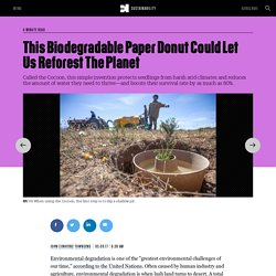 This Biodegradable Paper Donut Could Let Us Reforest The Planet