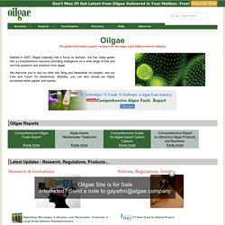 Biodiesel from Algae Oil - Oilgae - Information, News, Links for Algal Fuel, Alga Bio-diesel, Biofuels, Algae Biofuel, Energy - oilgae.com
