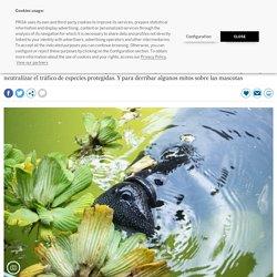 Biodiversidad: Devolverle al reino animal lo que es suyo