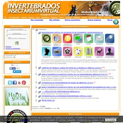 Biodiversidad Virtual / Invertebrados