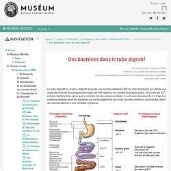 Biodiversité et EDD: Des bactéries dans le tube digestif