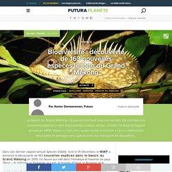 Biodiversité : découverte de 163 nouvelles espèces le long du Grand Mékong