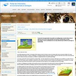 Strates et maillage : les piliers de la biodiversité bocagère