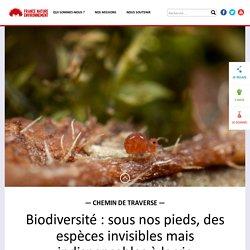 Biodiversité : sous nos pieds, des espèces invisibles mais indispensables à la vie