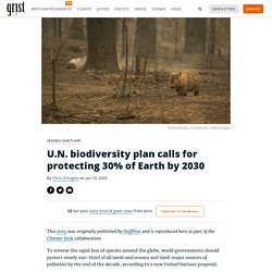 U.N. biodiversity plan calls for protecting 30% of Earth by 2030