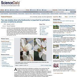 SCIENCE DAILY 14/01/13 Two New Studies Show Why Biodiversity Is Important for Pollination Services in California Almond