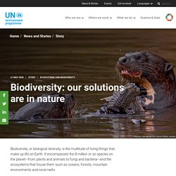 Biodiversity: our solutions are in nature