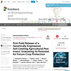 Front. Bioeng. Biotechnol., 29 January 2020 First Field Release of a Genetically Engineered, Self-Limiting Agricultural Pest Insect: Evaluating Its Potential for Future Crop Protection