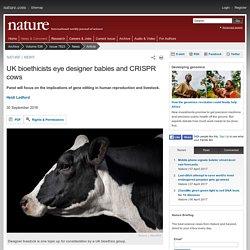 NATURE 06/10/16 UK bioethicists eye designer babies and CRISPR cows
