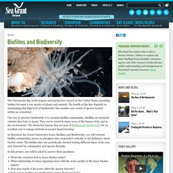Biofilms and Biodiversity