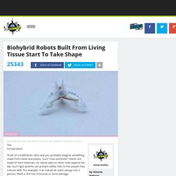 Biohybrid Robots Built From Living Tissue Start To Take Shape