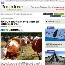 Biolait, la coopérative des paysans qui échappe à la crise