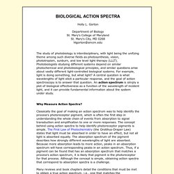 BIOLOGICAL ACTION SPECTRA
