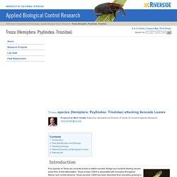 Applied Biological Control Research: Trioza (Hemiptera: Psylloidea: Triozidae)