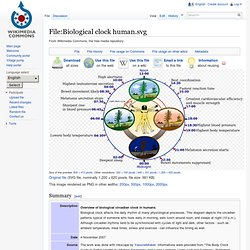 Biological clock human.svg - Wikipedia, the free encyclopedia