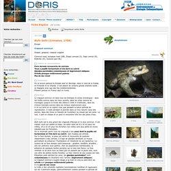 DORIS - FFESSM - Biologie et plongée - Faune et flore sous-marines et dulcicoles