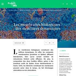 Les membranes biologiques : des structures dynamiques