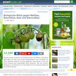 Biologische Mittel gegen Mehltau, Braunfäule, Rost Sternrußtau
