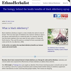 The biology behind the health benefits of black elderberry syrup -