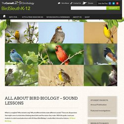All About Bird Biology – Sound Lessons