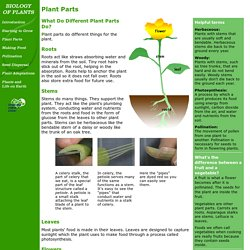 Biology of Plants: Plant Parts
