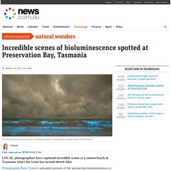 Bioluminescence Tasmania: Spotted at Preservation Bay
