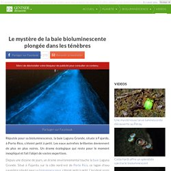 Le mystère de la baie bioluminescente plongée dans les ténèbres
