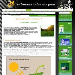 La biomasse regroupe toute la matière organique, végétale ou animale. Mais d'où vient-elle ?