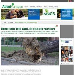 Biomeccanica degli alberi, disciplina da valorizzare