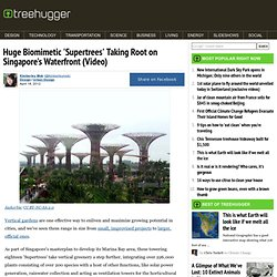 Huge Biomimetic 'Supertrees' Taking Root on Singapore's Waterfront (Video)