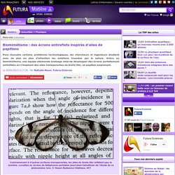 Biomimétisme : des écrans antireflets inspirés d'ailes de papillons