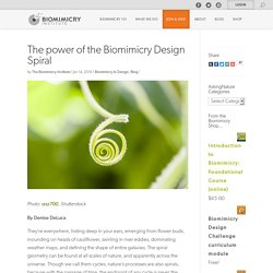 The power of the Biomimicry Design Spiral – Biomimicry Institute