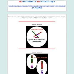 2 étapes dans la Méiose : reductionnelle et équationnelle