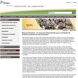 OMAFRA_GOV_ON_CA 16/04/13 Blossom Protect : un nouveau biopesticide pour combattre la brûlure bactérienne de la pomme