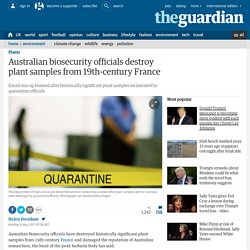 Australian biosecurity officials destroy plant samples from 19th-century France