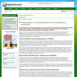 AGRISALON 05/04/12 Indispensable, le riz devra évoluer vers des variétés plus productives