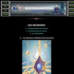 BIOTECHNOZEN: Les neurones