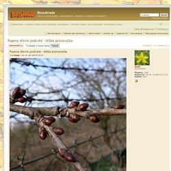 Pupeny dřevin podruhé - těžká poznávačka : Poznávačky rostlin