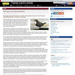 PLANET EARTH 09/08/13 Bird eggs reveal urban pollution