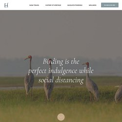 Birding is the perfect indulgence while social distancing
