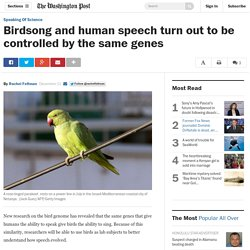 Birdsong and human speech turn out to be controlled by the same genes