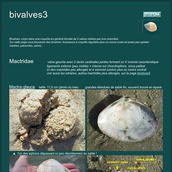 Les coquillages bivalves